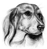 Long Haired Dachshund Compliment Slips